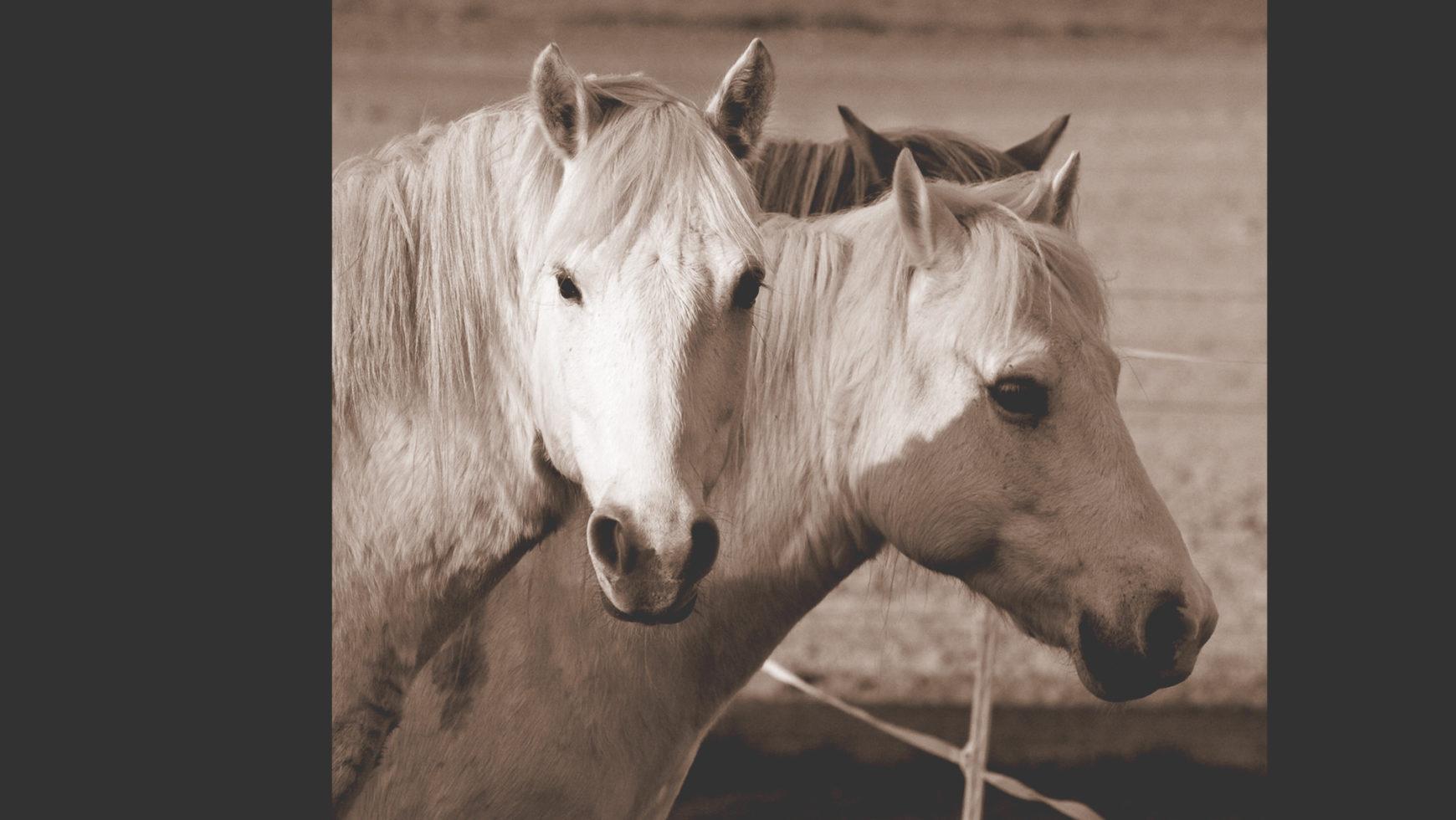 Pferdeauszeit