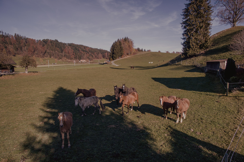 pferde-in-einer-natuerlichen-herde